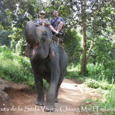 Chiang Mai, Tailandia: paseo de 1 hora por la selva a lomos de un elefante.