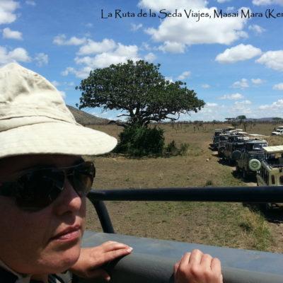 Masai Mara, Kenya: observando desde el Jeep el árbol en el que el leopardo está comiendo.