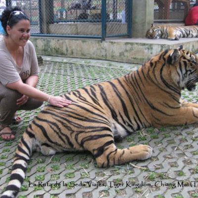 Tiger Kingdom, Chiang Mai (Tailandia): acariciando un lindo gatito en el complejo Tiger Kingdom. Una experiencia escalofriante.