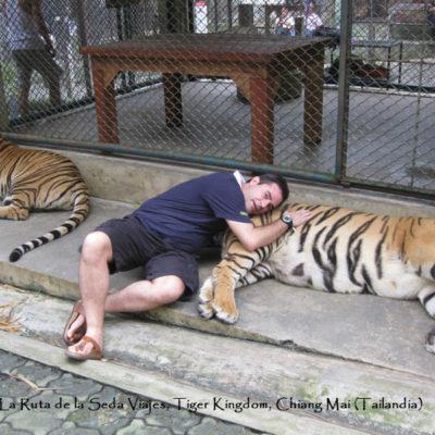 Tiger Kingdom, Chiang Mai (Tailandia): tumbado sobre un gran tigre mientras otro vigila mi espalda para que no me ataquen.